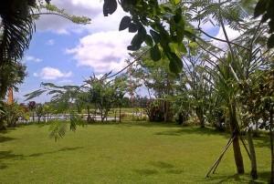 Bali Camping Ubud Camp Green Pic