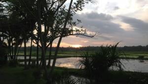 Bali Gathering Sunset Dinner & Single Electone