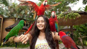 Object Wisata di Ubud Bali Bird Park