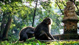 Object Wisata di Ubud Monkey Forest