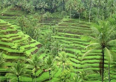 Object Wisata di Ubud Tegallalang Rice Terrace