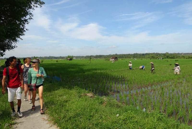 Bali Rice Paddies Trekking Ubud Camp 02